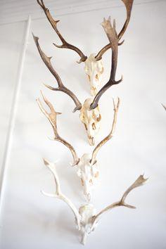 Fallow Deer cascade. Mandibles, Cape Town.