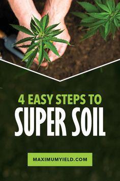 Cannabis Cultivation, Cannabis Plant, Growing Weed, Organic Gardening Tips, Organic Fertilizer, Hydroponic Gardening, Backyard Aquaponics, Plants, Hemp