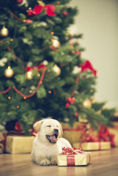 8 Holiday Gift Ideas for Dog Lovers Who Have Everything