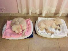 Coco y Princess