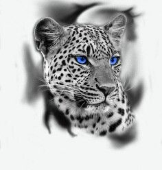 Leopard tattoo design