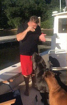 Other Funny Gifs http://gif-tv.tumblr.com/ And Funny Youtube Video - https://www.youtube.com/watch?v=qQKw5m0I_qc #dogsfunnytumblr
