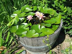 62 Best images about E. Container for Water lily on Pinterest ...