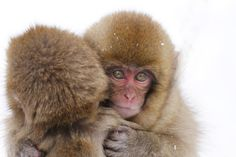 .First a hug. Then KILL!!!