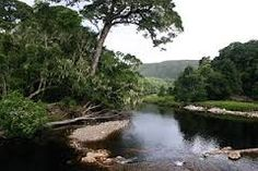 tsitsikamma south africa - Google Search Knysna, Canopy, South Africa, River, Nature, Southern, African, Outdoor, Image