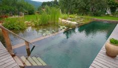 Seems like an awesome permaculture integration of pool and pond.