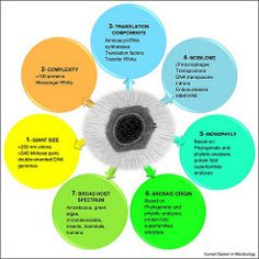 Features of giant viruses