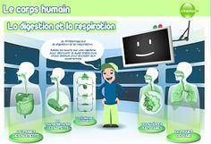Le corps humain - Un module pédagogique de Curiosphère sur l'anatomie humaine. Saurez-vous remettre chaque élément à sa place ?
