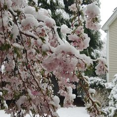 Beautiful Snowy Sat in April! Day before Greek Easter. Greek Easter, My House, Homes, Day, Outdoor, Beautiful, Outdoors, Houses, Home