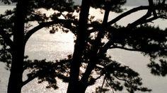 해운대 동백섬의 아침