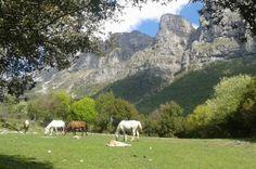 #White Pegasus #horseriding #facilities #Papigo #Zagorochoria #Epirus With WeGreek card you get a generous discount! | WeGreek
