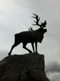 "See 26 photos and 2 tips from 47 visitors to New Foundland Memorial. ""Much respect for the Canadian youth, who are volunteers to guard and guide the. Beaumont Hamel, Mother Family, Newfoundland, Moose Art, Road Trip, Canada, Memories, News, Places"