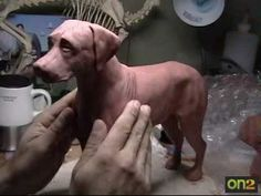 free dog clay sculpting. tutorials  | vistit my blog www handsofcaesar com or website www handsofcaesar com ...