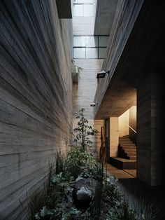 Brutalist Residential Building by Studio Rick Joy Project: Tennyson 205 Architects: Studio Rick Joy Location: Mexico City, Mexico Photographer: Joe Fletcher Tucson, Narrow Staircase, Box Building, Exposed Concrete, Local Architects, Concrete Structure, Beautiful Park, Studio City, Spanish Colonial