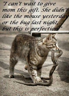 Cat with snake: I can't wait to give mom this gift. She didn't like the mouse yesterday or the bug last night, but this is perfection.