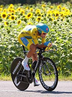 TdF 2014 - 20 : A classic Tour shot of the yellow jersey and a field of sunflowers - Photo: © Tim de Waele/TDW Sport