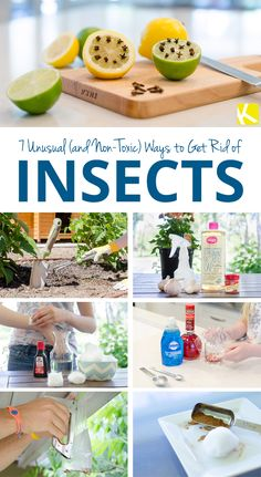 7 Unusual (and Non-Toxic) Ways to Get Rid of Insects