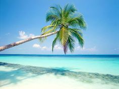 Google Image Result for http://www.wallpaperpimper.com/wallpaper/Landscape/Ocean/Beach-Palm-Tree-2-NGZF4DCDKI-1024x768.jpg