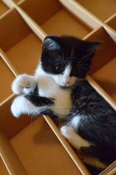 Compartmentalized kitten. - http://humorandfail.com/compartmentalized-kitten/