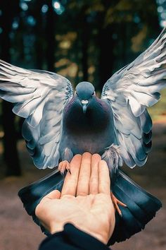 Likes, 60 Comments - Wildlife Cute Pigeon, Pigeon Bird, Wildlife Nature, Nature Animals, Beautiful Horses, Beautiful Birds, Pigeon Breeds, Dove Pictures, Funny Animals