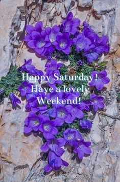 Good Afternoon Quotes, Good Morning Saturday, Good Morning Quotes, Happy Saturday, Happy Weekend, Saturday Greetings, Saturday Quotes, Days And Months, Have A Happy Day