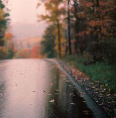 autumn, nature, and rain image
