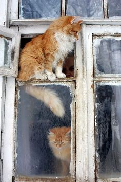 BIG CITY APARTMENT-LIVING KITTIES……THERE IS ALWAYS SOMETHING GOING ON -- JUST SIT HERE LONG ENOUGH AND YOU CAN SEE ANYTHING AND EVERYTHING……………ccp