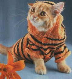 pets clothing, knitted hats and sweaters