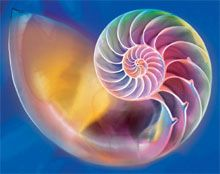 The Story of the Chambered Nautilus