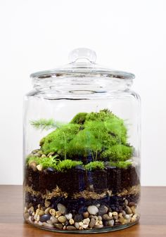 Japanese Hill in Terrarium by GreenCarboy Terrarium Plants, Japanese, Green, Home, Japanese Language
