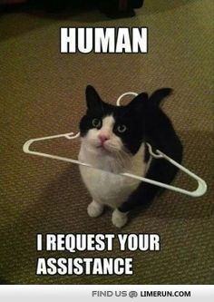 Check out: Animal Memes - I need assistance. One of our funny daily memes selection. We add new funny memes everyday! Bookmark us today and enjoy some slapstick entertainment! Funny Animal Jokes, Funny Cat Memes, Cute Funny Animals, Cute Baby Animals, Funny Cute, Cute Cats, Funny Pranks, Super Funny, Silly Cats