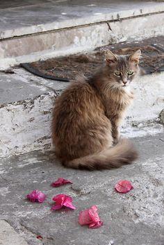 Kitty sits near fallen petals of Bougainvillea