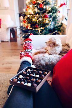 Cupcake Christmas, Christmas Puppy, Cozy Christmas, Vintage Christmas, Christmas Ideas, Nautical Christmas, Xmas Holidays, Christmas Music, Christmas Morning