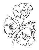 Poppy Flower Bouquet  Coloring page