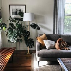 "15.7k Likes, 74 Comments - west elm (@westelm) on Instagram: ""Perfect weeknight spot. Shop the Andes Sofa on westelm.com! #mywestelm : @kaitlinmgreen"""