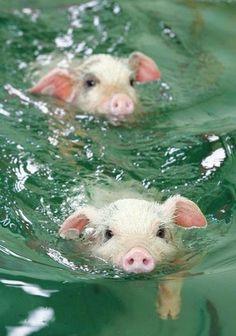 they swim! weeeee