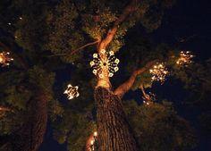 Chandelier Tree in Silverlake, CA | Whimsey | Pinterest ...