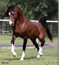 One of the horses I want