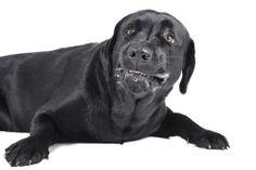 Envenenamento em gatos e cachorros: o que fazer nessas horas?