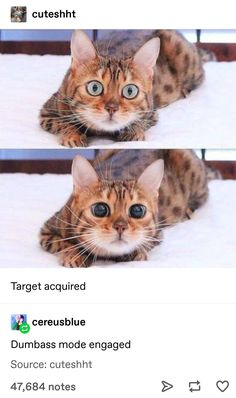 """Friday Memes To Help You Decompress - Funny memes that """"GET IT"""" and want you to too. Get the latest funniest memes and keep up what is going on in the meme-o-sphere. Funny Animal Memes, Funny Animal Pictures, Animal Jokes, Cat Memes, Funny Memes, Cute Little Animals, Cute Funny Animals, Funny Cute, Cute Cats"""