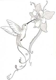 hummingbird and flower pencil drawing - Google Search