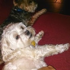 Happy Hounds Pet Sitting and Dog Walking in Burleson TX - Google+  Pets are comfortable at home with a pet sitter!