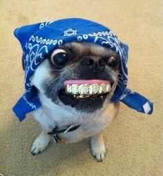 You don't choose the pug life. The pug life chooses you. Cute Funny Animals, Cute Baby Animals, Funny Cute, Funny Dogs, Pug Love, I Love Dogs, Cute Puppies, Cute Dogs, Animal Jokes
