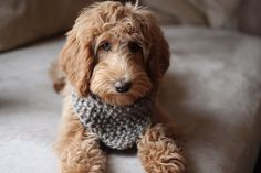 Thick Knitted Dog Bandana, Dog Scarf, Dogs Accessories, Pets Accessories, Photo Prop For Dogs, Pets Neckwear, Gift for dogs