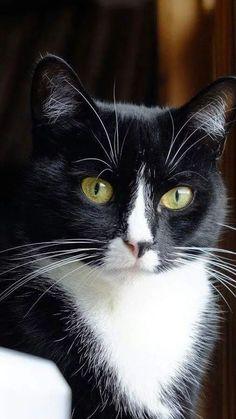 40,000 Cats! Visit https://www.pinterest.com/abetterresume/meow-cats-only