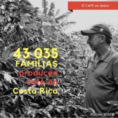 ¿Quiere saber más de café?  Le invito a mi blog: lacafeografa.com  #cafédeEspecialidad #cafédeCostaRIca #CoffeeBlog Costa, Blog, Movies, Movie Posters, Do I Wanna Know, Films, Film Poster, Blogging, Cinema
