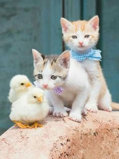 Kitties and chickies! What a lovely spring photo...