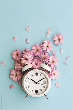 Stock photo of Alarm clock and cherry blossom by RuthBlack is part of Clock wallpaper -