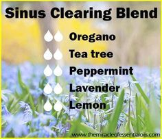 Use this Sinus Clearing Blend for relief from congested sinuses!