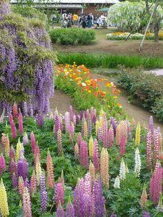 Ashikaga Flower Park in Ashikaga City, Tochigi Prefecture, Japan